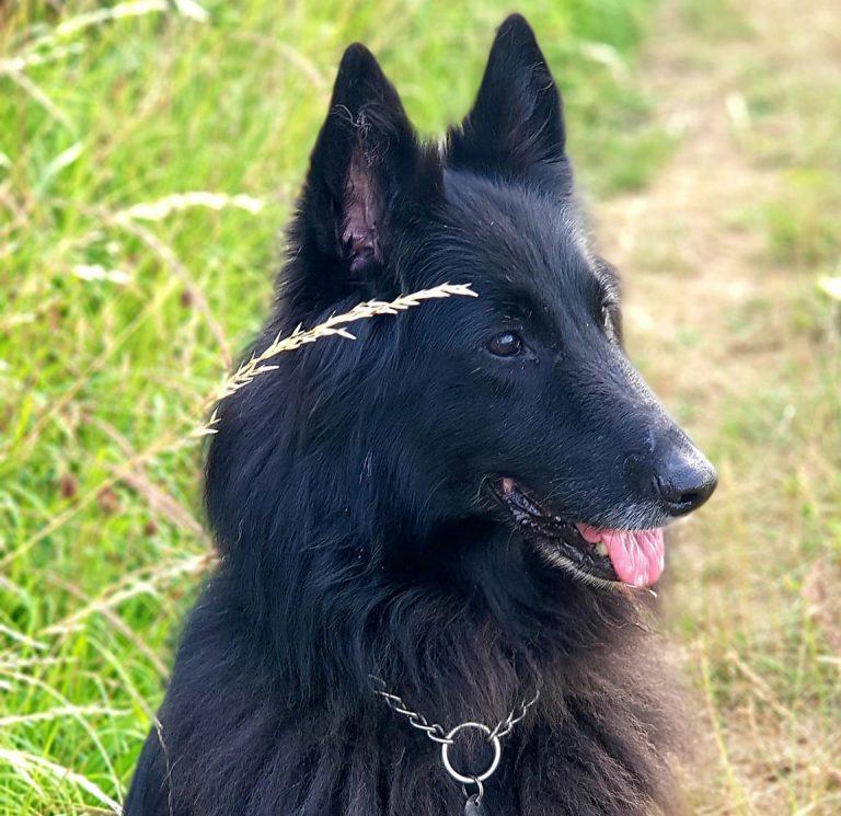 Dog51