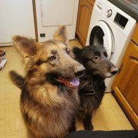 Koda & Bear 1