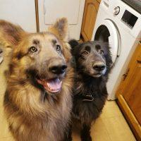 Koda & Bear